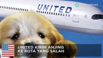 United bawa anjing di pesawat yang salah, penerbangan tertunda dua jam - TomoNews