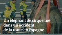 En Espagne, un éléphant de cirque tué dans un accident de la route