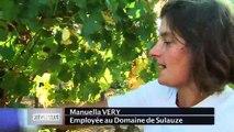 VUE D'ICI : Vue d'ici : Vendanges tardives et Joutes Provençales