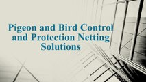 Install Bird Netting Solutions to Keep Birds and Pigeons Away