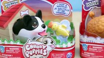 Chubby Puppies Boston Terrier and Golden Doodle Toy Dogs Unboxing