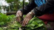 Ideas globales: Vietnam, extremos climáticos | Global 3000