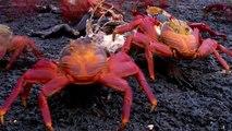David Attenboroughs - Galapagos S01E02