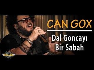 Can Gox - Dal Goncayı Bir Sabah (Akustik)