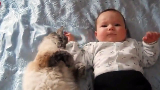 Cat Playing with Baby: Best of Cute Cats Love Baby Compilation PART 2