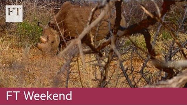 Walking with black rhinos in Kenya