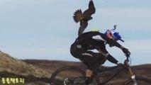 Những khoảnh khắc con người bị loài chim tấn công được camera ghi lại