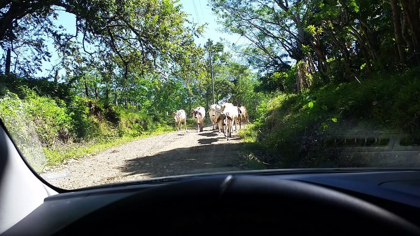 Cool things we see in Costa Rica #2 | Godialy.com