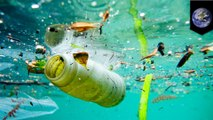 Great Pacific Garbage Patch is 16 times bigger than previously estimated - TomoNews