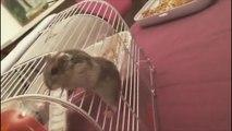 Auch Hamster sind nicht immer Klettermeister