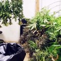 buy medical marijuana online,  medical marijuana for sale, www.mariguanaheadshop.com,  medical marijuana for cancer,  buy cannabis online, buy medical marijuana for pain