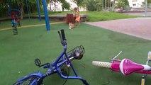 Un chat se venge contre une fillette qui lui a marché dessus