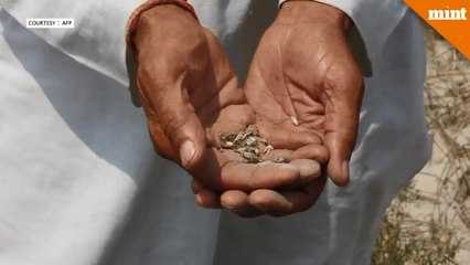 India says 'No' to patenting seeds