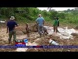 Seekor Gajah Terjebak Di Lumpur  -NET10
