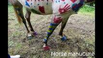2017 Fête Syrius Opaline  Opus 5  Horse paint avec Aquarelle