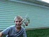 Une grosse araignée orbe est en train d'emballer son repas sous les yeux d'un enfant