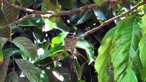 Wild - Bird Nest Feeding Baby Birds a Week