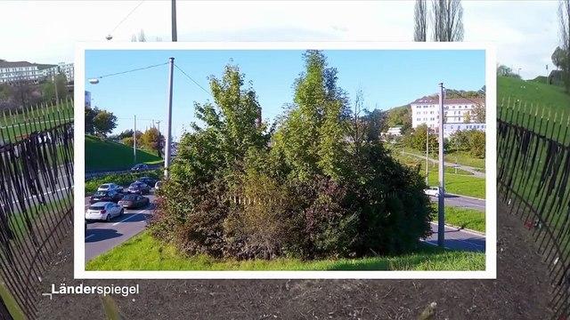 Kahlschlag: Stadt rodet Kunstwerk