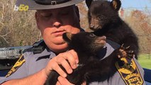 Trooper Saves Orphaned Bear Cubs After Mother is Killed Crossing the Road