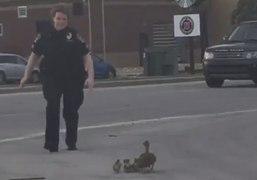 Kentucky Police Officer Helps Ducks Cross the Road
