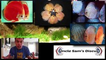 DISCUS FISH -Love/Hate 7 Reasons I Don't Keep Discus in My Aquariums