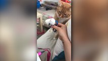 Les chats aussi aiment jouer au Spinner