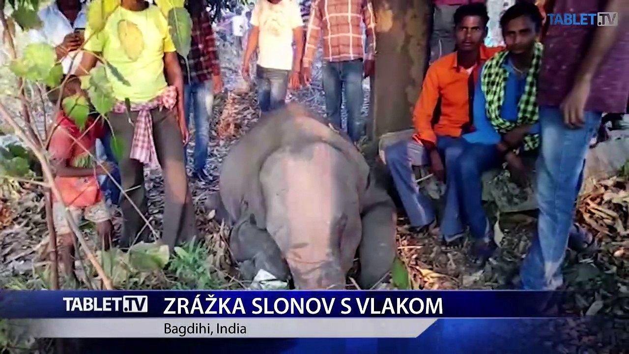 V Indii došlo ku kolízii stáda slonov s nákladným vlakom