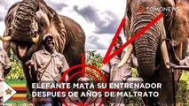 Ataques de elefante: elefante forzado a dar paseos pisotea a su domador por resentimiento - TomoNews