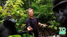 Wikipedia lucha por los derechos de autor de la viral foto de un macaco negro