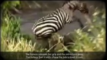 5 CRAZIEST Animal Fights Caught On Camera - Dailymotion
