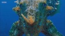 Planeta Azul II, una serie para conocer la belleza de la vida marina