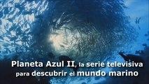 Planeta Azul II, la serie televisiva para descubrir el mundo marino
