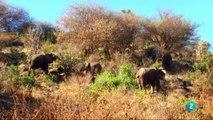 Documental El Serengueti la gran aventura africana,ANIMALES  SALVAJES,AFRICA,ANIMALES,DOCUMENTALES