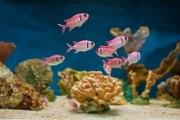 Comment entretenir son aquarium ?