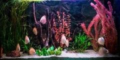 Les différents types d'aquariums