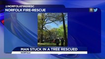 Man Trying to Rescue Cat Gets Stuck in Tree