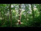 Erstein abattage de frênes en forêt du Krittwald