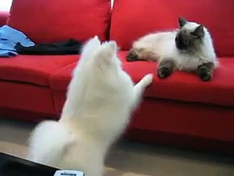 Cute Dog-Cat fight Video