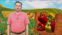 De China a Tu Cocina - Carne de pescado con verduras+Camarón de agua dulce a la salsa de tomate