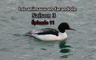 Les animaux en farandole: saison 3: épisode 11