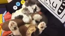 Sieste d'un Hamster avec... un chat !