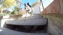 Lucky Dog - Otto & Lex