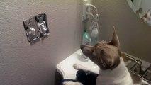 Une souris dans un interrupteur nargue un chien