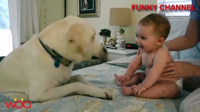 Funny Dogs and Babies Playing Together - Cute dog  baby compilation ...