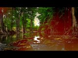Forest Sounds, Relaxation Music - Meditation Sounds, Naturaleza, Study Sounds, Soothing Relaxation