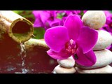 Deep Meditation Music: Relaxation Flute Music, Calming Music, Soft Music, Soothing Music ♫♫♫