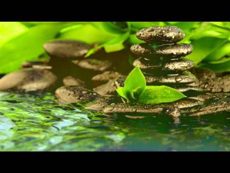 Zen Meditation Music : Relaxation Zen Music, Relax Music for Inner Peace, Calming Music