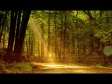 Indian Flute Music : Relaxation Music, Soothing Music, Calming Music, Yoga Music, Healing Music