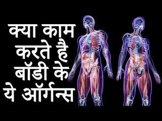 जानिए क्या काम करते है बॉडी के ये ऑर्गन्स | Important Organs in The Human Body