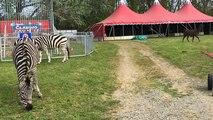 Le cirque Claudio Zavatta s'installe place des loisirs